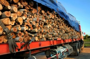 trailer with logs fdp